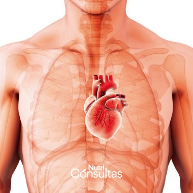Dieta alta en fibra: salud cardiovascular
